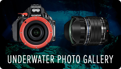 Underwater Photo Gallery