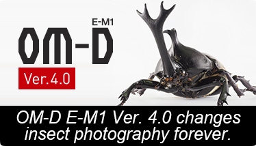 OM-D E-M1 Ver. 4.0 changes insect photography forever.
