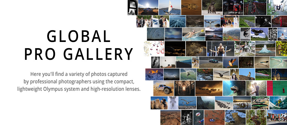 Global Pro Gallery
